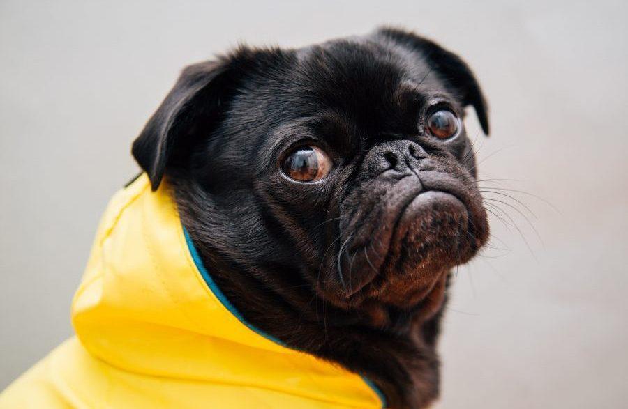 """Por qué este analista cree que dogecoin """"en realidad está jugando, no invirtiendo"""""""